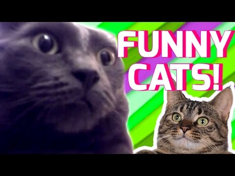 Funny Cats Compilation 2017 | Best Funny Cat Videos Ever | Funny Vines
