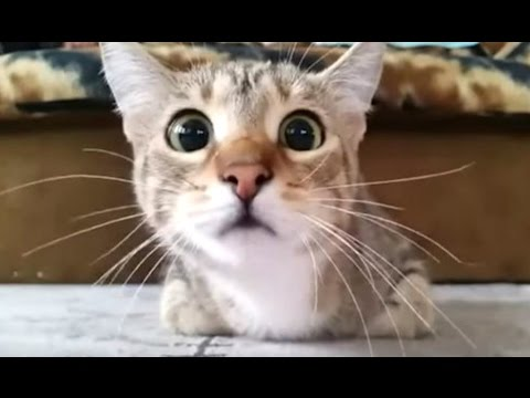 Funny Videos Of Funny Cats Compilation 2016 [BEST OF]