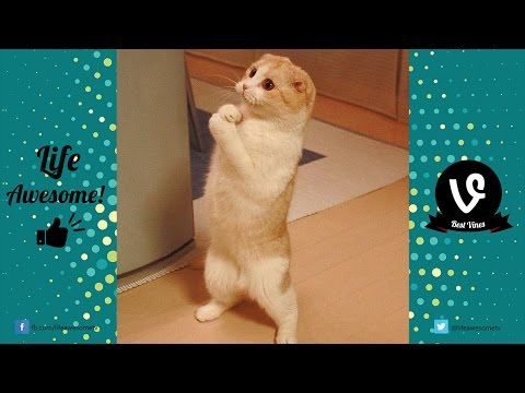 *Try Not To Laugh* Funny Cat Fails Compilation 2017 | Funny Videos 2017 ???? by Life Awesome